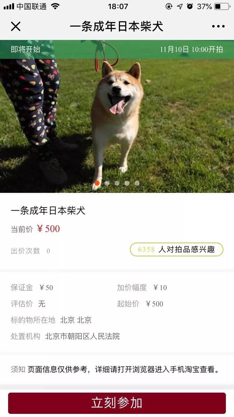法院认真起来,连狗都不放过——记首条被司法拍卖的狗